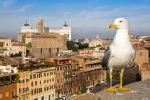 Urban seagull against the panorama of Rome — Stock Photo