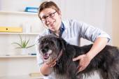 Vet examining a dog with a stethoscope in the office — Stock Photo