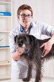 Vet examining dog with stethoscope — Stock Photo
