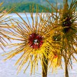 Plastic flowers on the beach — Stockfoto #58039441