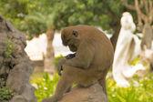 Monkey on the stone — Stock Photo