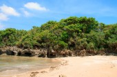 Tropical undergrowth on the coastal rock — Stock Photo
