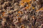 マデイラ島の崖の上にカレーとベージュの地衣. — ストック写真
