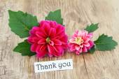 Thank you card with pink dahlias — Stock Photo