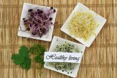 Healthy living card with alfalfa, leek sprouts, coriander and watercress — Stock Photo