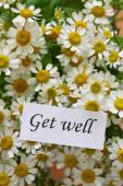 Get well card on chamomile flowers — Stock fotografie