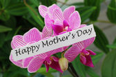 Happy Mother's day card with pink orchid — Stock fotografie