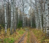 Road in an autumn forest — Stock Photo