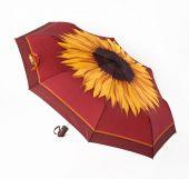 Bright umbrellas — Stock Photo