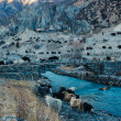 Постер, плакат: Herd of yaks forced the mountain river Yak the first livestock animal of villagers in Himalaya