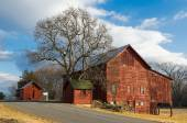 A group of Old Red Barns with a magnificent Tree on a country road in Upstate NY, bathed in late afternoon sunshine. — Stock Photo