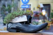 Levende schoenen — Stockfoto
