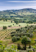 Typical Tuscan landscape  in Italy — Stock Photo