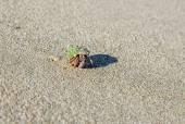 Hermit crab on the beach — Stock Photo