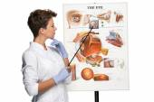 Optician or oculist woman telling about structure of the eye — Stock Photo