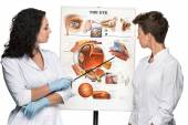 Two optician or oculist women telling about structure of the eye — Stock Photo