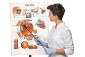 Optician or oculist woman tells about structure of the eye — Stock Photo