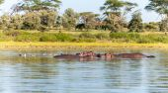 Group of hippopotamus in water — Stock Photo