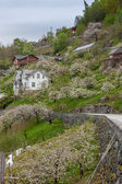 Landscape with mountains.  village in Norwegian fjords — Stock Photo