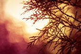Silhouette d'arbre à feuilles persistantes dans pré pendant le lever du soleil — Photo