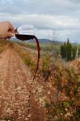стакан вина — Стоковое фото