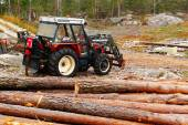 Tractor with felling trees  — Stock Photo