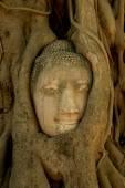 Budha image — Stock Photo