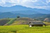 Hut in race paddy — Stockfoto