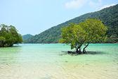 熱帯の海にマングローブの木 — ストック写真