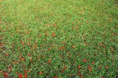 Flowers fall on green grass — Stock Photo