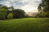 Green grass field in public park, — Stockfoto