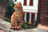 Red tabby cat sits on curb — Stock Photo