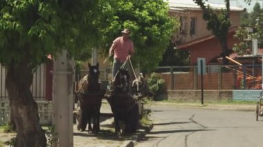 Man in cart with horses — Stock Video