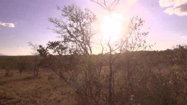 Panorama African Bush — Stock Video