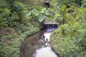 Botanical garden - São Paulo City — Foto de Stock