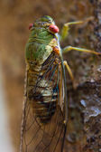 Cicada at waterfall in chiangrai thailand. — Stock Photo
