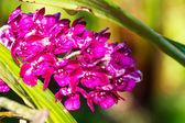 Beutiful orchid — Stockfoto