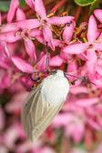 Moth on flower — Stock Photo