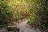 Path in nautre and flower around — Stock Photo