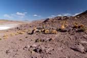 Atacama desert — Stock Photo