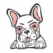 Bulldog french pet — Stock Vector