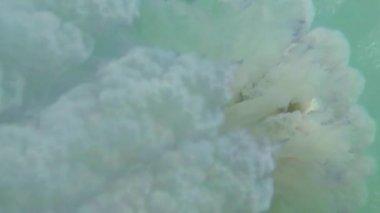 Méduse méduses closeup flotte lentement dans l'eau de mer, les alevins se cachant sous une méduse vénéneuse flottant dans les rayons de l'eau du soleil par le biais de la méduse — Vidéo