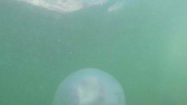 Medusa denizanası closeup yavaş yavaş deniz suda yüzen fry denizanası sayesinde güneş su ışınlarının yüzen bir zehirli denizanası altında gizleme — Stok video