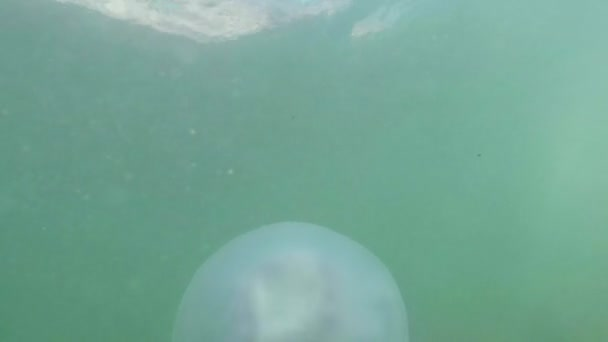 Medusa Medusa closeup lentamente flota en el agua de mar, fry esconde bajo una venenosa medusas flotando en los rayos de agua del sol a través de las medusas — Vídeo de stock