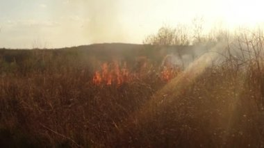 Sun shines through the smoke and fire, burning dry grass and bushes in early spring or late fall — Stock Video