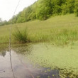 Dragonfly - mating season, oviposition, mountain summer green pond, background of the forest — Stock Video #57245793