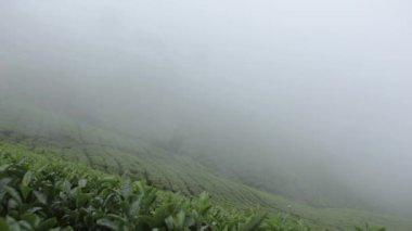 Te odlingar i munnar, kerala, Indien — Stockvideo