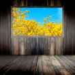 Old grunge wall and yellow flowers bloom — Stock Photo #56127243