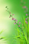 Rosa blomma och färskt gräs med ljus återspeglar i morgon — Stockfoto