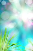Abstrakt vackra färskt gräs och ljus spegla i morgon — Stockfoto